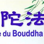 Dharma-service du Bouddha Amitabha 2020